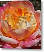 Hybrid Tea Rose Metal Print