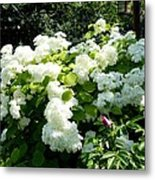 Hydrangeas And A Rose Metal Print