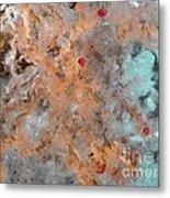Hydrothermal Vent Tubeworms Metal Print