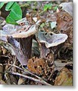 Hygrophorus Caprinus Mushrooms Metal Print