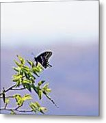 I Fly High Metal Print