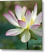 I Love Lotus Metal Print