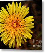 I Want To Be A Flower... Metal Print