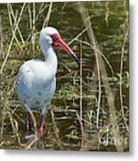 Ibis At Local Pond Metal Print by Lynda Dawson-Youngclaus