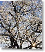 Ice Covered Tree At Sunrise Metal Print