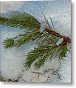 Ice Crystals And Pine Needles Metal Print