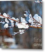 Ice On A Branch Metal Print