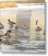 Ice Skating Geese Metal Print