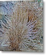 Iced In I Metal Print