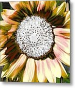 Iced Oatmeal Cookie Sunflower Metal Print by Devalyn Marshall