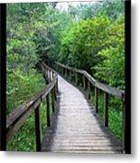 Ichetucknee Forest Pathway Metal Print