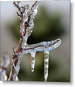 Icy Branch-7529 Metal Print