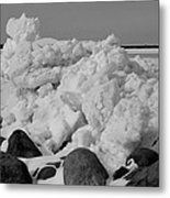 Icy Shoreline In Black And White Metal Print