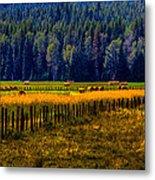 Idaho Hay Bales  Metal Print by David Patterson