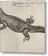 Iguana, 1585 Metal Print