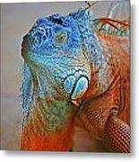 Iguana Close-up Metal Print