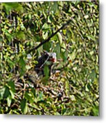 Iguana Hiding In The Bushes Metal Print
