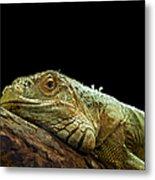 Iguana Metal Print by Jane Rix