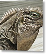Iguana Two Metal Print