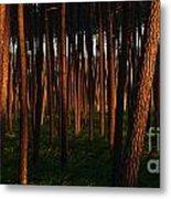 Illuminated Forest Metal Print