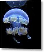 Illuminated Jellyfish  Metal Print
