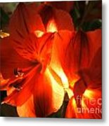 Illuminated Red Orange Alstromeria Photograph Metal Print