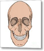 Illustration Of Anterior Skull Metal Print