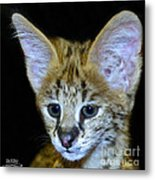 Im All Ears Metal Print