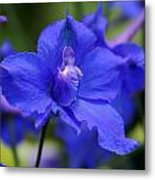 In A Blue Mood Metal Print