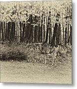 In A Yellow Wood Antique Metal Print