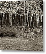 In A Yellow Wood Sepia Metal Print