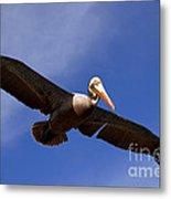 In Flight Pelican Metal Print