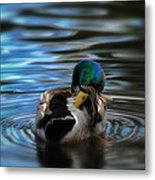In His Own Moment Metal Print