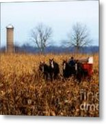 In The Corn 1 Metal Print
