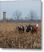 In The Corn 2 Metal Print
