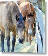 In The Country... Metal Print