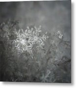 In The Garden Of The Snowflakes Metal Print