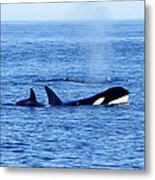 In The Great Wide Ocean Metal Print