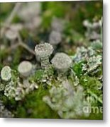 In The Land Of Little Mushrooms  Metal Print