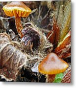 In The Strawberry Patch  Metal Print