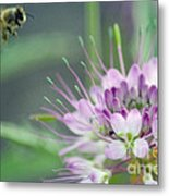 Incoming Bee Metal Print