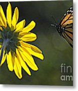 Incoming Monarch Metal Print