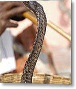 Indian Cobra Metal Print