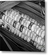 Indian Corn Black And White Metal Print