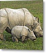 Indian Rhinoceroses Metal Print by Tony Camacho