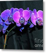 Indigo Mystique Orchids  Metal Print