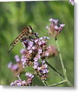 Insect And Flower Metal Print