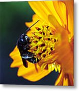 Insect And The Wild One Metal Print