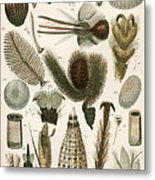 Insect Microscopy, 19th Century Metal Print