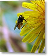 Insect On Flower 2 Metal Print